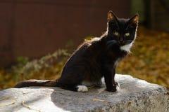 Schwarzweiss-Kätzchen mit grünen Augen lizenzfreie stockfotos
