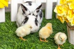 kleines schwarzes kaninchen stockfoto bild 24979410. Black Bedroom Furniture Sets. Home Design Ideas