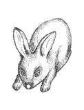 Schwarzweiss-Kaninchenillustration Stockfoto