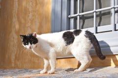 Schwarzweiss-Katze Stockfotografie