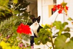 Schwarzweiss-Katze Lizenzfreie Stockfotos