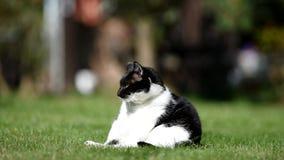 Schwarzweiss-Katze auf dem Garten stock footage