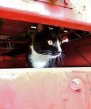 Schwarzweiss-Katze blickt aus einer Öffnung von landwirtschaftlichen Maschinen des Stückes heraus Stockfotos