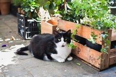 Schwarzweiss-Katze, die auf einer Pflasterung in Brüssel, Belgien sitzt Stockfotos