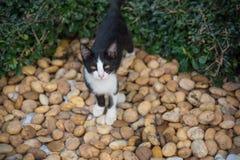 Schwarzweiss-Katze im Garten Stockbild