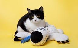 Schwarzweiss-Katze mit einem Teddybärstudiofoto Lizenzfreies Stockfoto