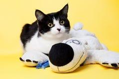Schwarzweiss-Katze mit einem Teddybärstudiofoto Lizenzfreie Stockfotos