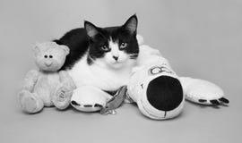 Schwarzweiss-Katze mit einem Teddybärstudiofoto-Monochrombild Stockfotos
