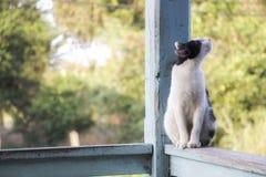 Schwarzweiss-Katze schauen oben zum Himmel Lizenzfreies Stockbild