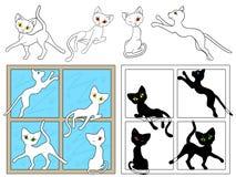 Schwarzweiss-Katzen auf den Fenstern Lizenzfreie Stockfotos
