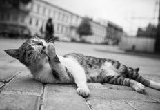 Schwarzweiss-Katzenfoto, das in der Straße in den verschiedenen lustigen Haltungen liegt Stockbilder