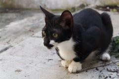 Schwarzweiss-Katzensitzen Lizenzfreie Stockfotos