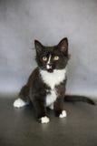 Schwarzweiss--Kitten Sitting Lizenzfreies Stockbild