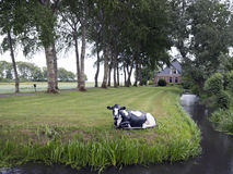 Schwarzweiss-Kuh in der Wiese vor typischem Bauernhof auf Niederländisch Lizenzfreie Stockbilder