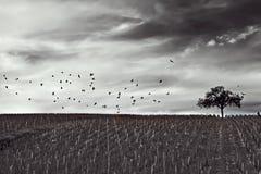 Schwarzweiss-Landschaft Stockfoto