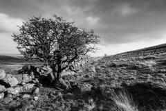 Schwarzweiss-Landschaft Dartmoor Lizenzfreie Stockfotos