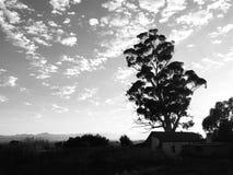 Schwarzweiss-Landschaft des frühen Morgens mit Baum Stockfotografie