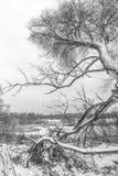 Schwarzweiss-Landschaft des Spätherbsts mit einer alten Weide auf der schneebedeckten Bank von einem gefrorenen See Stockfotos