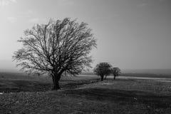 Schwarzweiss-Landschaft mit Bäumen an einem nebeligen und sonnigen Tag lizenzfreie stockfotografie