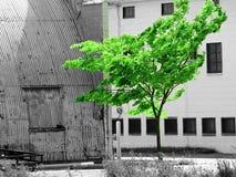Schwarzweiss-Leben Stockbilder