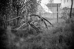 Schwarzweiss-Leben Stockfoto