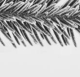 Schwarzweiss-Makrofoto von den Fichtenzweigen umfasst mit Eiskristallnahaufnahme Lizenzfreies Stockfoto