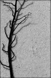 Schwarzweiss-Meerespflanze lizenzfreie stockfotografie
