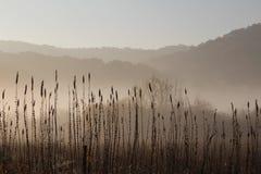 Schwarzweiss--Misty Morning Marsh Driftless Midwest Lizenzfreies Stockfoto