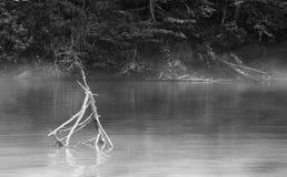 Schwarzweiss-Morgennebel am See James Lizenzfreie Stockbilder