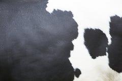 Schwarzweiss-Muster auf Fell auf Seite der Kuh Stockfotos