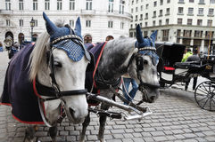 Schwarzweiss-Pferde und Wagen Lizenzfreies Stockbild