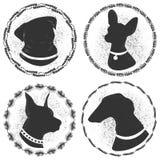 Schwarzweiss-Porträts von Hunden Silhouettiert Pug, Terrier, Dobermannjagdhund Lizenzfreie Stockfotos