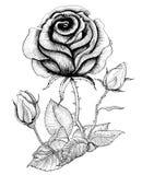 Schwarzweiss-Rose stock abbildung