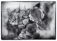 Schwarzweiss-Rosen Aquarellmalerei Stockfotos