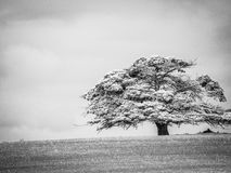 Schwarzweiss-Schattenbaum Stockbild