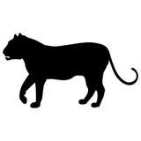 Schwarzweiss-Schattenbild eines Tigers oder des Löwes mit einem Endstück, Tatze Lizenzfreies Stockfoto