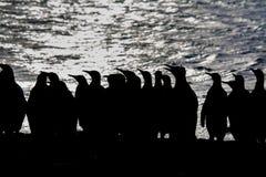 Schwarzweiss-Schattenbild von Königpinguinen mit Ozeanhintergrund Stockfotos