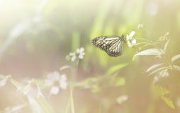 Schwarzweiss-Schmetterling auf Grasblume lizenzfreies stockbild