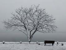 Schwarzweiss-Schneelandschaft mit Baum und Bank stockbild
