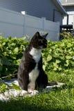 Schwarzweiss-Smoking Cat Outside Lizenzfreies Stockbild