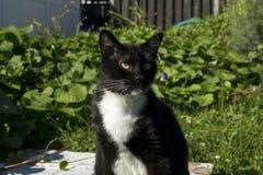 Schwarzweiss-Smoking Cat Outside Lizenzfreie Stockfotos