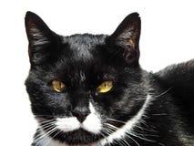 Schwarzweiss-Smoking Cat Portrait lizenzfreie stockfotografie