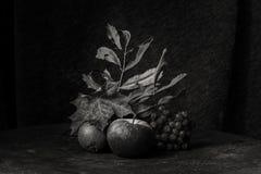 Schwarzweiss-Stillleben des Herbstes Lizenzfreie Stockbilder