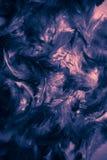 Schwarzweiss-- und bunte Federbeschaffenheiten Hintergrund der sch?nen Nahaufnahme und Tapetenkunst lizenzfreie abbildung
