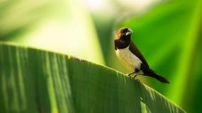 Schwarzweiss-Vogel Lizenzfreie Stockbilder