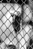 Schwarzweiss von der Affehand, die einen Käfig berührt Lizenzfreies Stockfoto