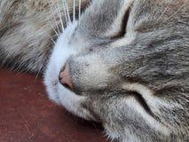 Schwarzweiss von einer Katze der Schlafengetigerten katze Lizenzfreie Stockfotografie