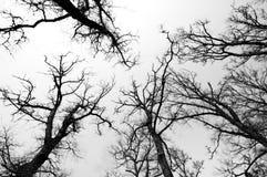 Schwarzweiss-Wald Lizenzfreies Stockbild