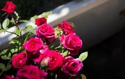 Schweben die Blume Lizenzfreie Stockfotografie