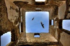 Schwebende Adler Stockfotografie